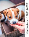 adorable beagle puppy in the... | Shutterstock . vector #1287196078