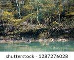 beautiful picturesque airy... | Shutterstock . vector #1287276028