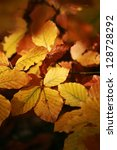 autumn leaves background on forest