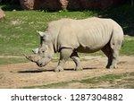 side view of a walking male... | Shutterstock . vector #1287304882