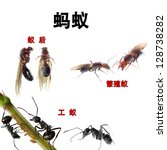 animal set, collage of ants in Chinese in front of white background - stock photo