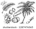 beautiful hand drawn botanical... | Shutterstock .eps vector #1287476365