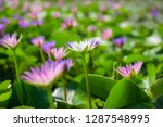 light pink and white of water... | Shutterstock . vector #1287548995