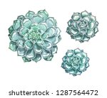 set of succulents hand drawn by ... | Shutterstock . vector #1287564472