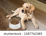 cute labrador dog on wooden... | Shutterstock . vector #1287762385