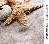 beach sand  shell and starfish