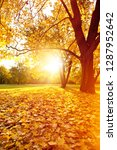 beautifull sunny sunset autumn... | Shutterstock . vector #1287952642