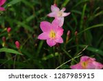 flowers of beauty   Shutterstock . vector #1287985915