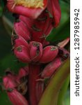 flowers of beauty   Shutterstock . vector #1287985942