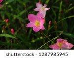 flowers of beauty   Shutterstock . vector #1287985945