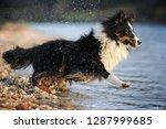 dog is running through the... | Shutterstock . vector #1287999685