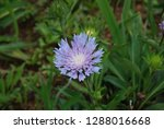 flowers and plant   Shutterstock . vector #1288016668