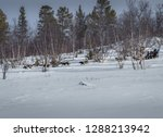 a shot from our husky sledge.... | Shutterstock . vector #1288213942