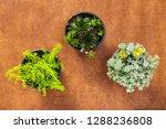 three beautiful succulent...   Shutterstock . vector #1288236808