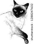 a sketch of a siamese cat | Shutterstock .eps vector #1288247632