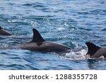 family of dolphin | Shutterstock . vector #1288355728