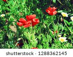 flower nature garden   Shutterstock . vector #1288362145