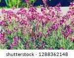 flower nature garden   Shutterstock . vector #1288362148
