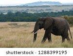 an elephant walking across the... | Shutterstock . vector #1288399195