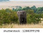 an elephant walking across the... | Shutterstock . vector #1288399198