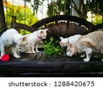 lovely cats family in my home. | Shutterstock . vector #1288420675