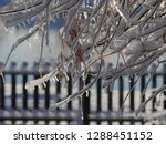 twigs hanging over a wooden... | Shutterstock . vector #1288451152