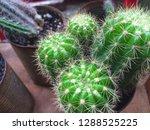 small cactus friends   Shutterstock . vector #1288525225