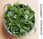Freshly Cut Stinging Nettles I...