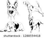 vector drawings sketches...   Shutterstock .eps vector #1288554418