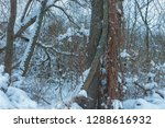 snow covered tree entwined with ... | Shutterstock . vector #1288616932