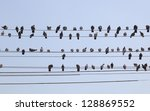 Flock Of Pigeons Sit On Wires....