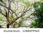 trees in the tropical jungle | Shutterstock . vector #1288699465