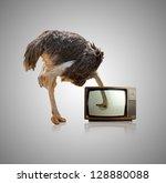 Ostrich Looking Through...