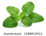 fresh lemon balm leaves ... | Shutterstock . vector #1288813912