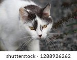 Small photo of Moody black and white cat with a look of verjuice on blurred grey background