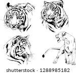 vector drawings sketches...   Shutterstock .eps vector #1288985182