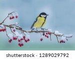 great tit parus major  on... | Shutterstock . vector #1289029792