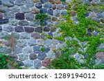stone wall entwined with ivy. | Shutterstock . vector #1289194012