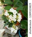blossom white flowers bouquet... | Shutterstock . vector #1289323825