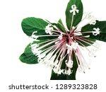 quezonla flower bouquet... | Shutterstock . vector #1289323828