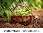Raw Green Beans In A Wicker...