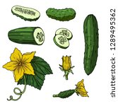 set with cucumbers on white... | Shutterstock .eps vector #1289495362