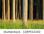 coastal forest on the baltic... | Shutterstock . vector #1289512102