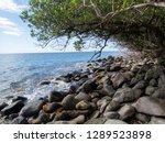 rocks and trees near the sea.... | Shutterstock . vector #1289523898