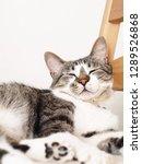 cat sleeping on a chair   Shutterstock . vector #1289526868