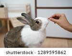 Stock photo the rabbit eat from hand 1289595862
