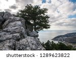 pine growing on the rocks.... | Shutterstock . vector #1289623822