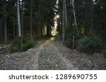 footpath into a coniferous... | Shutterstock . vector #1289690755