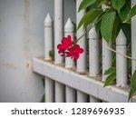 the old huses of scharloo ... | Shutterstock . vector #1289696935