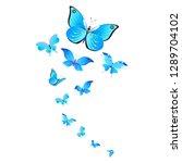 beautiful butterflies  blue... | Shutterstock .eps vector #1289704102